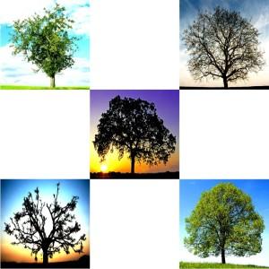 Tree-02
