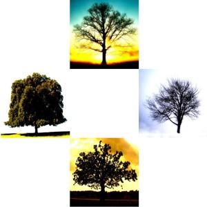 Tree-03