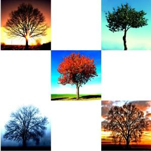Tree-04