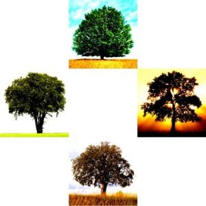 Tree-05