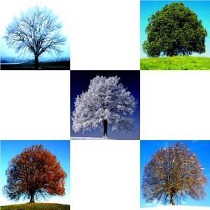 Tree-06